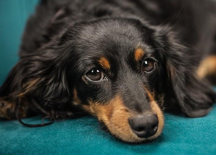 dog on blue carpet